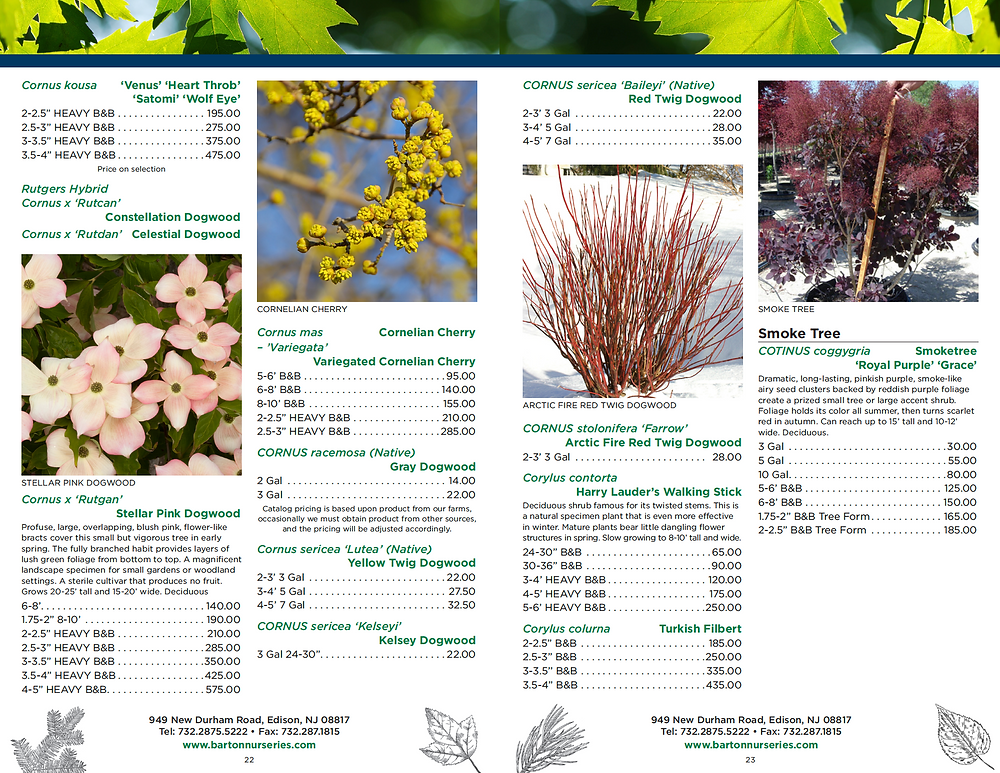 Plant Nursery Catalog Designer - Tree