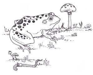 Frog-Illustration-Idelle-Fisher.jpg