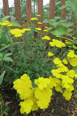 Community-Garden-IMG_3801