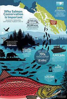 Infographic Annual Report - Salmon Documentary