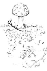 Mushrooms & Soil Illustration