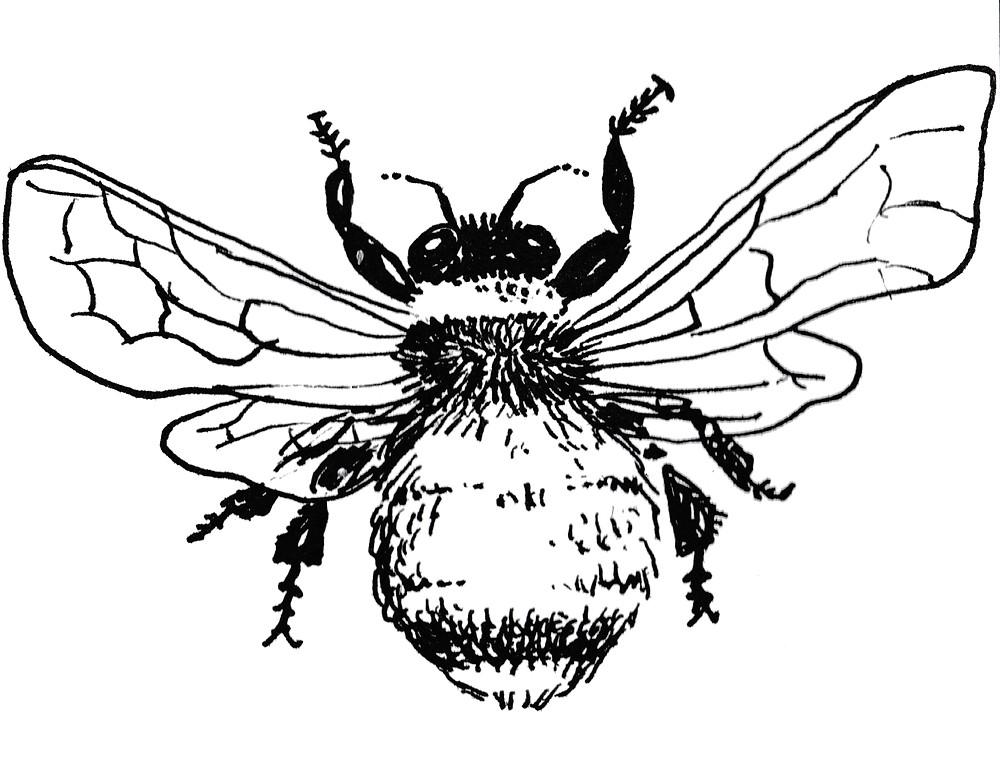 Garden Illustrator - Bumblebee by Idelle Fisher