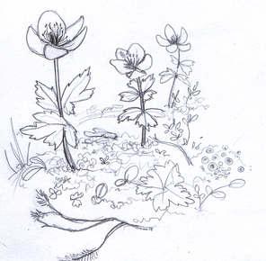 Denver Illustrator – Flowers