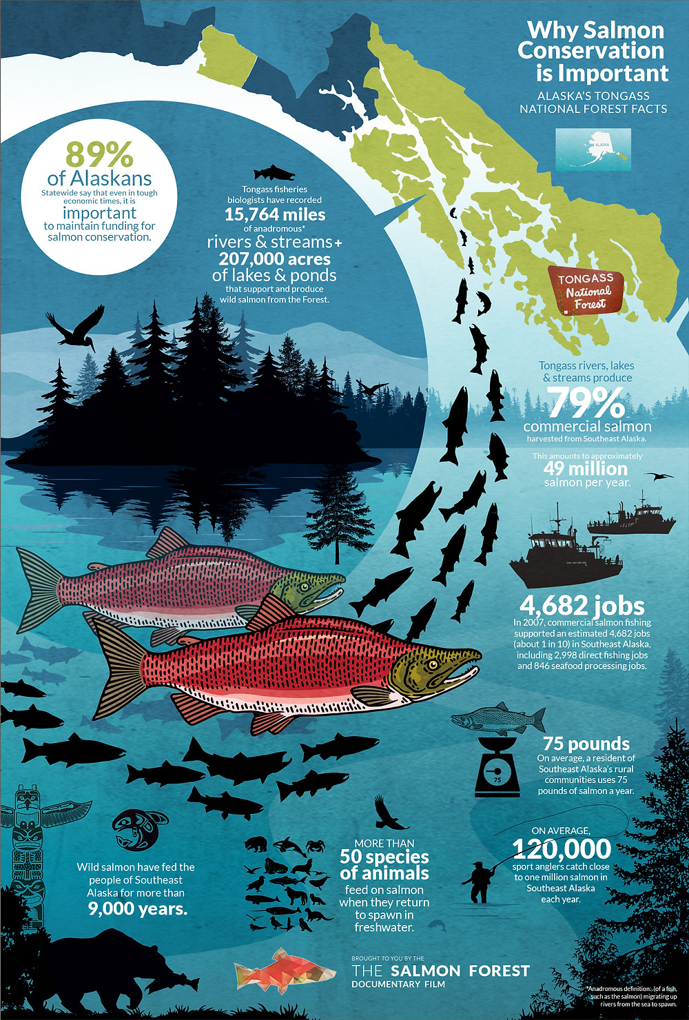 Forest & Salmon Conservation Infographic Design for Documentary