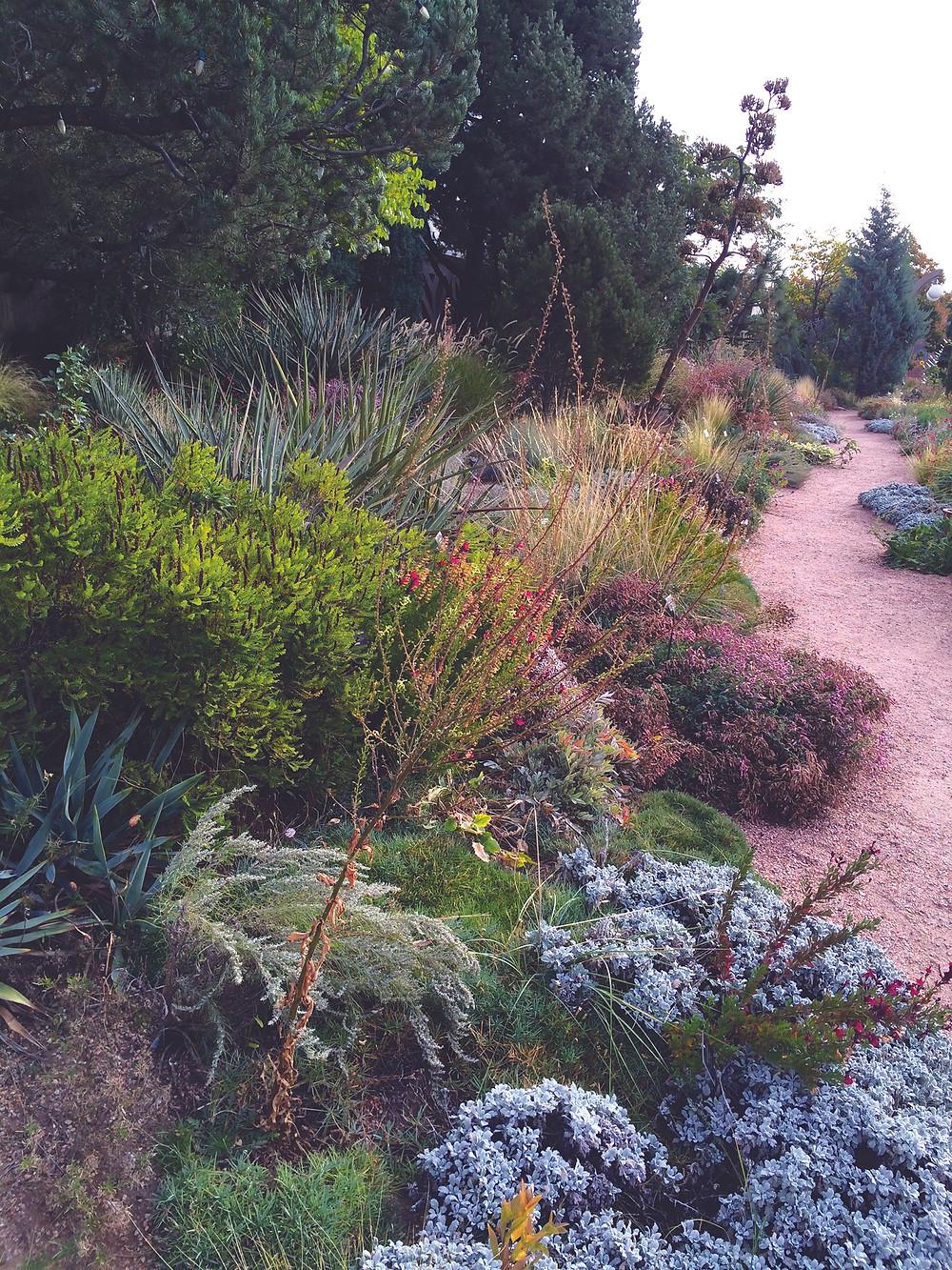 Late autumn in the Roads Watersmart Garden at DBG designed by Lauren Springer. Photo: Lauren Springer