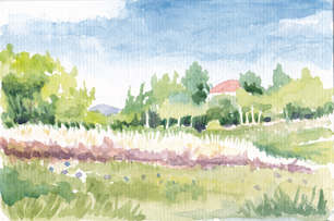 Denver Illustrator – Landscape