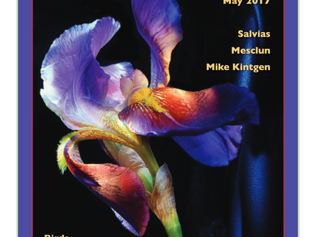 Editor's Letter: May 2017