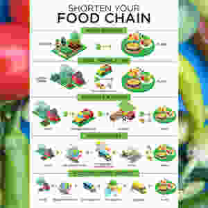Infographic Designer for Food Chain infographic - square version 1