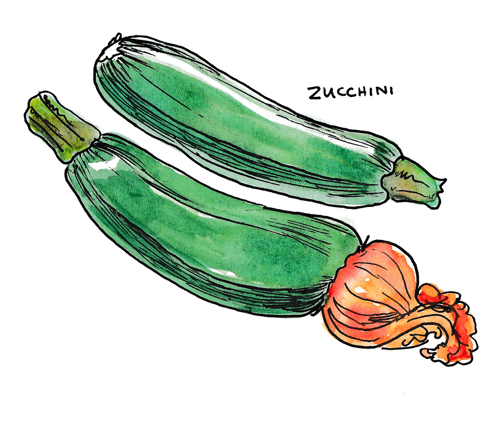 Children's Book Illustrator - for Gardening Books - Zucchini Ilustration Watercolor and Ink