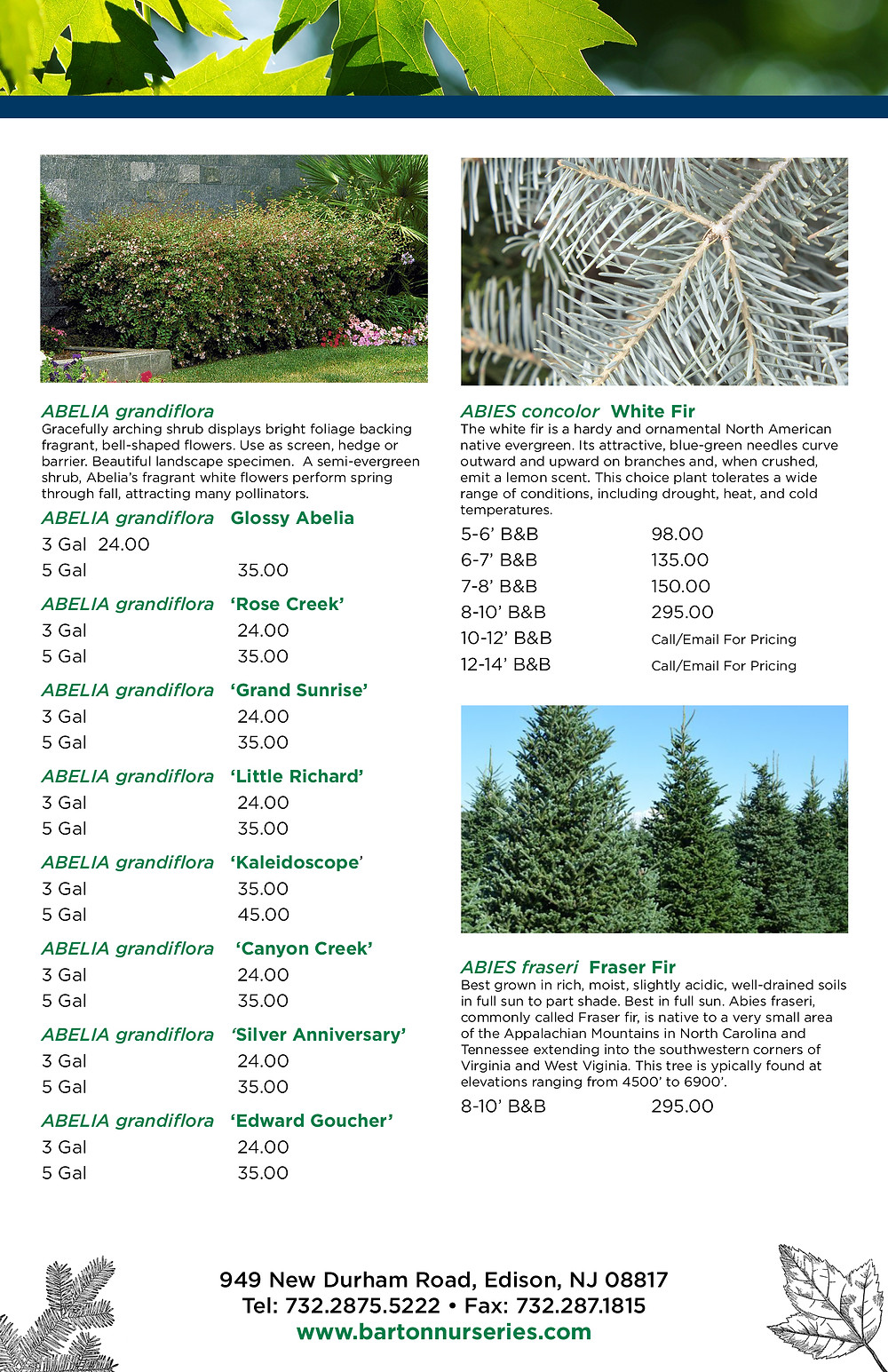 Catalog Designer for Tree Nursery - Barton Nurseries in NJ
