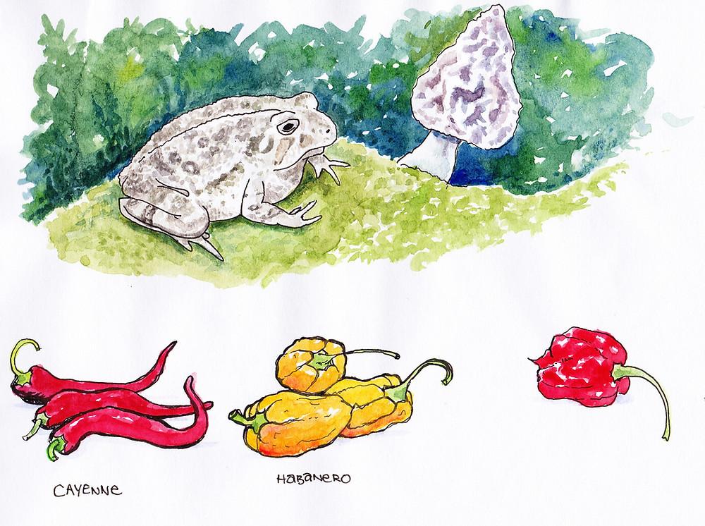 Vegetable Garden Illustration - Toad, Peppers, Mushroom