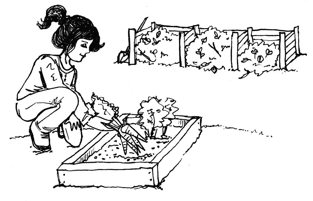 Vegetable Garden Illustration - Community Garden / Compost Bins Illustration by Idelle Fisher