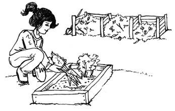 Compost and Community Garden illustration, pen and ink by a Denver Illustrator