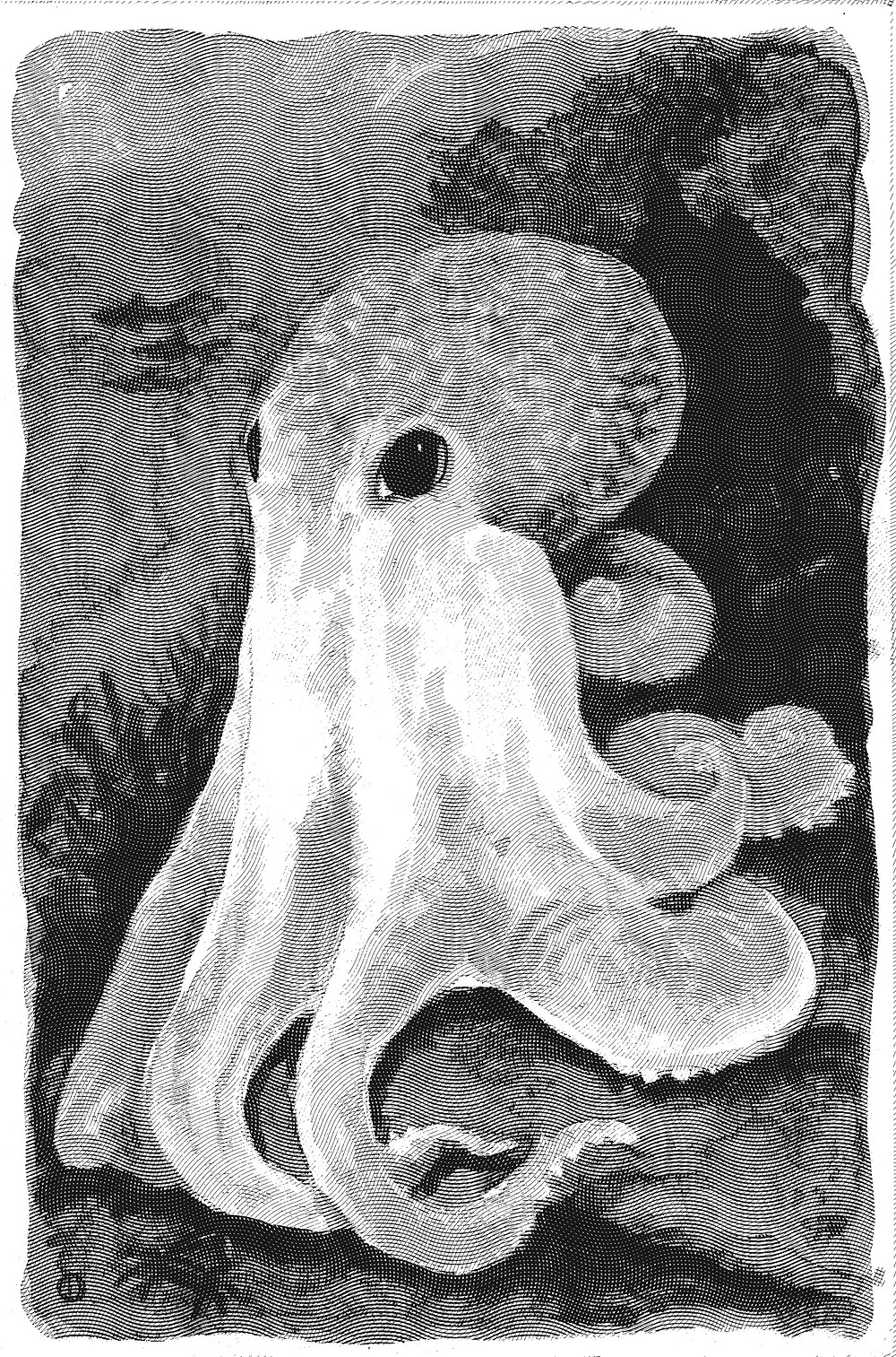 Engraved Octopus Illustration by Idelle Fisher -  Engraving effect created by Photoshop Actions
