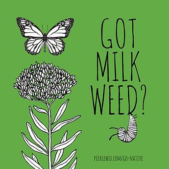 Got Milkweed?