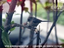 Aero_birds.jpg