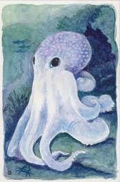 Denver Illustrator – Octopus