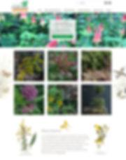Best-Wix-Websites-Native-Plants-Blog-.jp