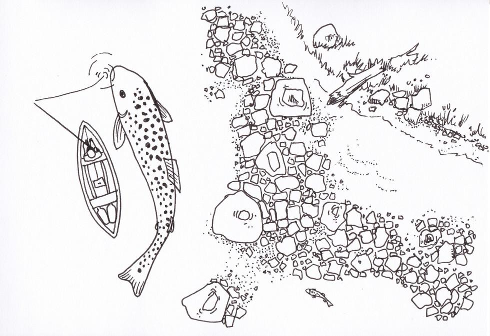 Big Trout Illustration