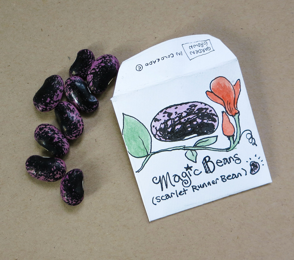 Seed Packet Design - Hand drawn concept