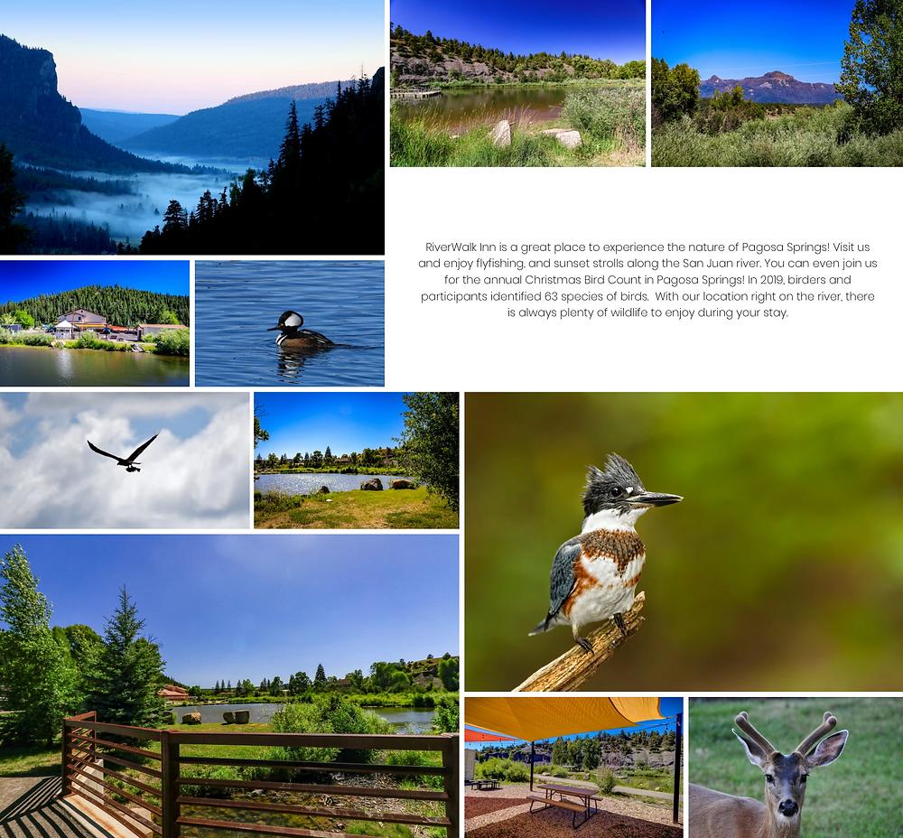 Hotel Website Designer - Custom Website Designs!