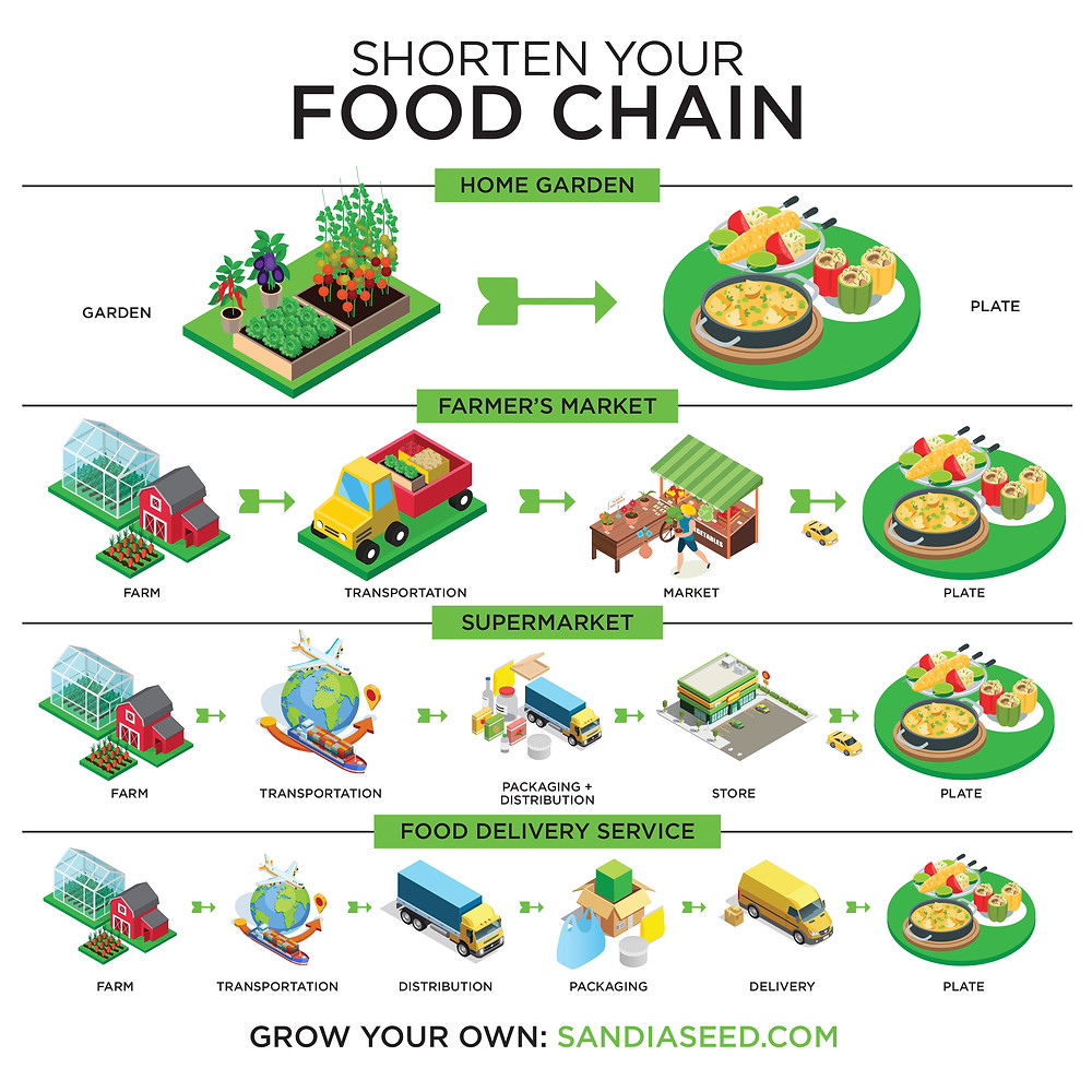 Infographic Designer for Food Chain infographic - square