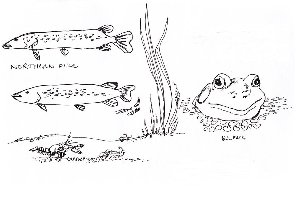 Children's Book Illustrator - for Gardening Books – Nature's Creatures, Illustration by Idelle Fisher