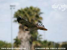 Aero_Hawk.jpg