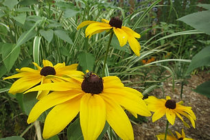 Finding Pollinator Safe Plants – a Summary