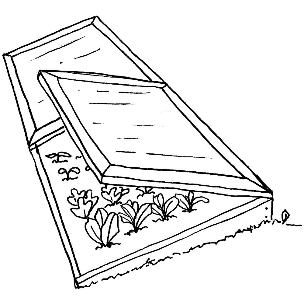 Garden Illustrator - Cold Frame Vegetables by Idelle Fisher