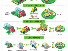 Food Waste Infographic - Shorten Your Food Chain