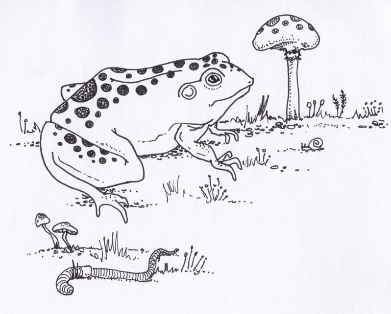 Vegetable Garden Illustration - Frog with Earthworm and Mushrooms