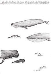 Whales Illustration by Idelle Fisher
