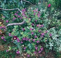 Late Summer Bloomers that can Take the Heat