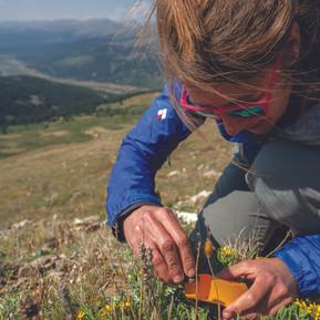 Notables:  Alpine Plants & One Health