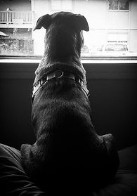 (Penny looking out the apartment window