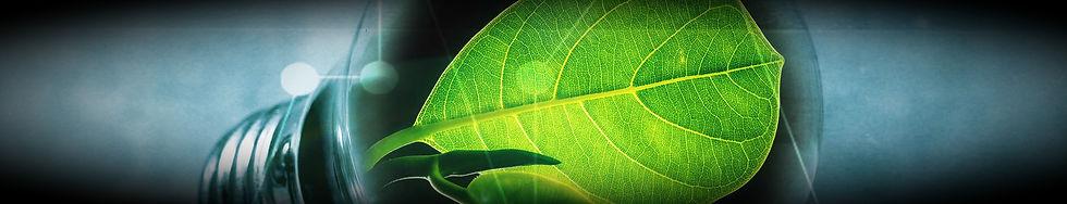 pelli sostenibili, innovazione, sustainable leather, panto