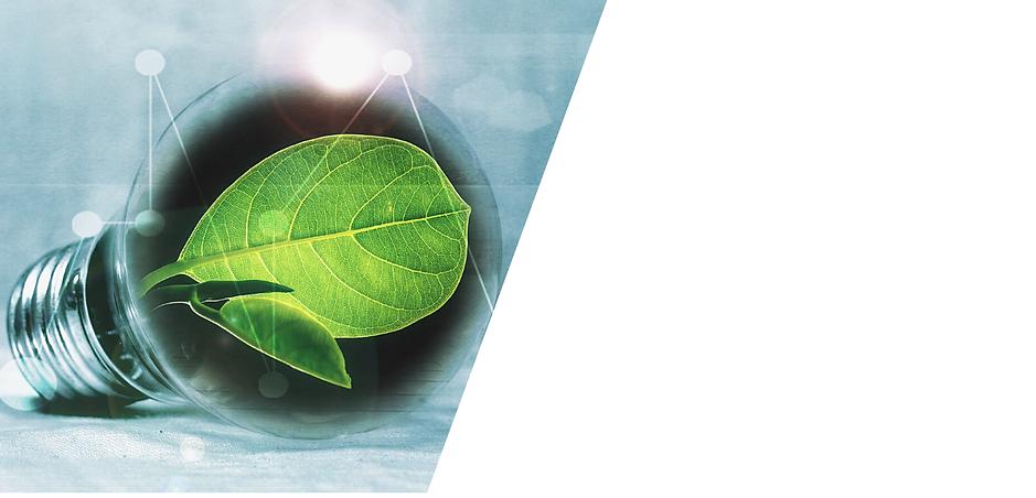 Pelli Sostenibili, Innovazione, Pelli Grezze, Pantografato, Ambiente, Conceria