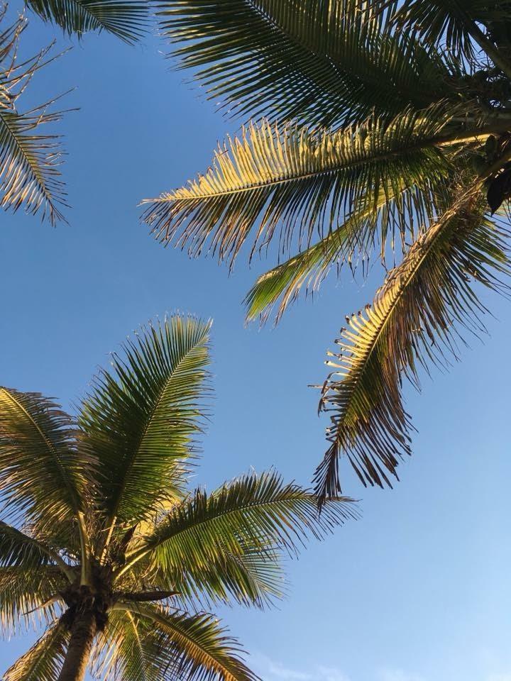 Palm trees at sunset, Rio de Janeiro