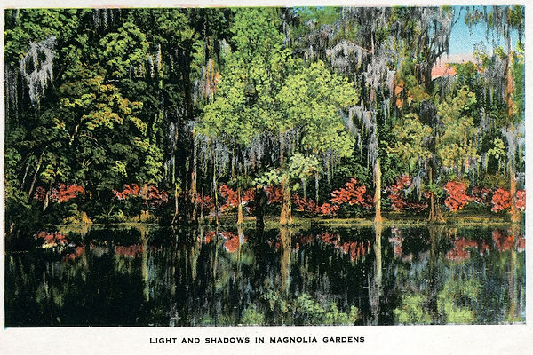 Photo J - Post Card Set - Magnolia Garde