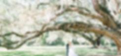 Pavilion_Oak_Trees_edited_edited.jpg