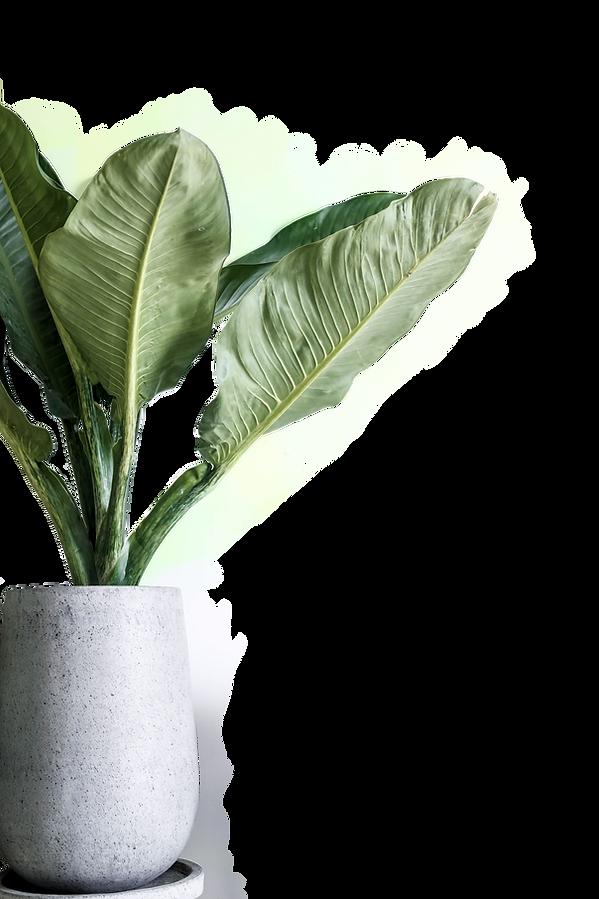 planta decorativa cmfonseca