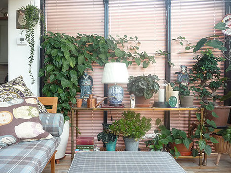 Indoor Plants; The Benefits