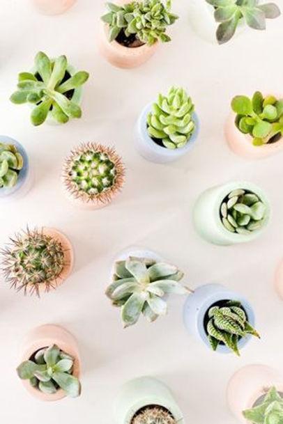 plants-mmxvii-yum-pinterest-succulent-wa