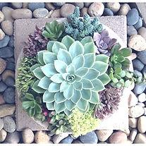 succulent_planter2_1_edited.jpg