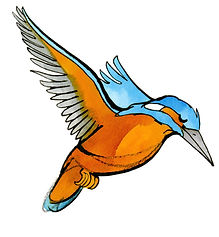 Ijsvogel-M-1.jpg