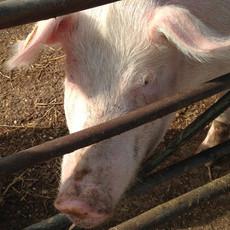 Farrowby Farm