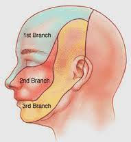 Anatomie du trijumeau: Dermatomes