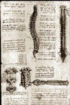 Leonardo da Vinci - Anatomie spinale