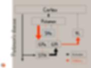 Neurophysiologie des noyaux gris centraux dans la maladie de Parkinson